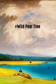 The Wild Pear Tree 2018